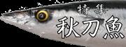 食欲の秋到来!さんま大漁!!