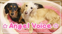 ☆Angel Voice☆