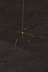 散り菊(ちりぎく) スッスッ…と、1本、また1本と落ちていく現象です