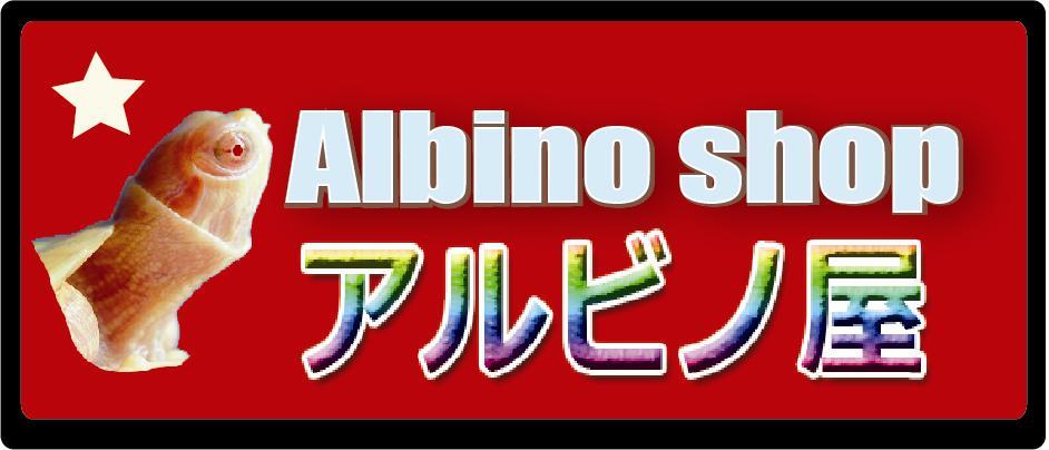 アルビノ屋