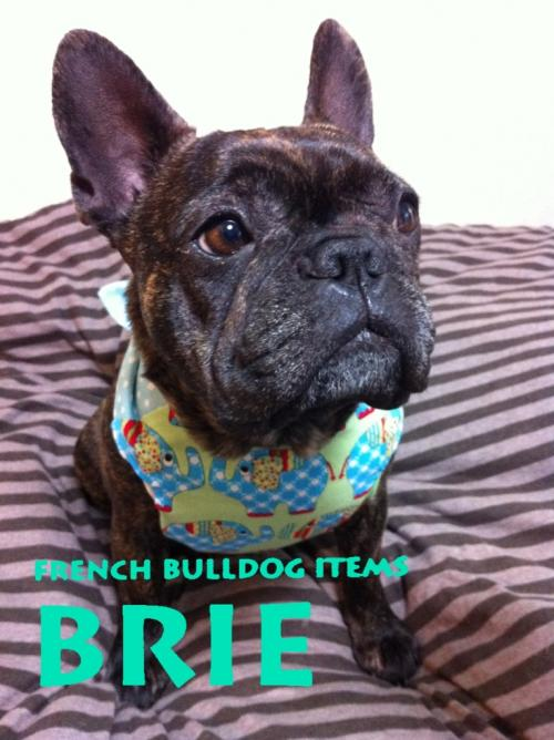 FRENCH BULLDOG ITEMS   BRIE