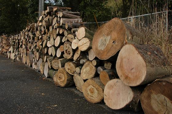 樫、椎、桜、ケヤキなどの広葉樹の丸太、薪の原木です。自宅でチェーンソーは使えないけど薪割りをしてみたいという方にお勧めです。