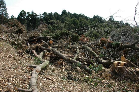 写真ような伐採現場の情報です