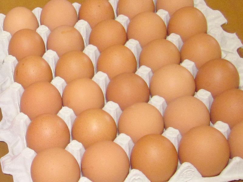平飼い地養卵赤たまご 60個