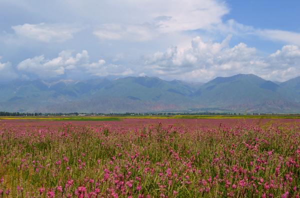 エスパルセットが咲き乱れる花畑