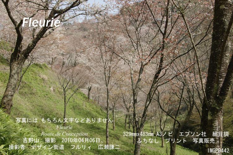 "<a href=""http://www.geocities.jp/xbcwx902/2010-haru-yoshino/2010-04-06/IMGP0442.jpg"">拡大表示</a><div><a href=""http://fleurie.cart.fc2.com/?ca=32"" style=""font-size: medium;""><span style=""font-size: 13.3333px;"">この写真 額縁 A3ノビ </span><span style=""font-size: 10pt;"">を購入ここから可</span></a><br><br></div>"