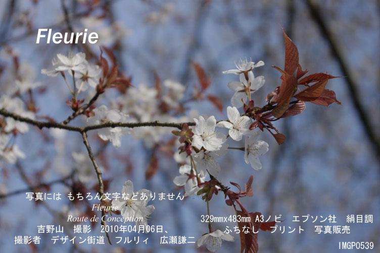 "<a href=""http://www.geocities.jp/xbcwx902/2010-haru-yoshino/2010-04-06/IMGP0539.jpg"">拡大表示</a><div><a href=""http://fleurie.cart.fc2.com/?ca=32"" style=""font-size: medium;""><span style=""font-size: 13.3333px;"">この写真 額縁 A3ノビ </span><span style=""font-size: 10pt;"">を購入ここから可</span></a><br><br></div>"