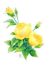 黄色薔薇イラストはがき