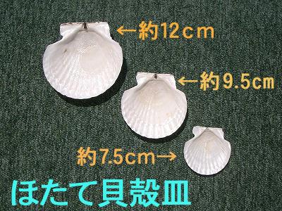 ほたて貝殻皿-9.5cm