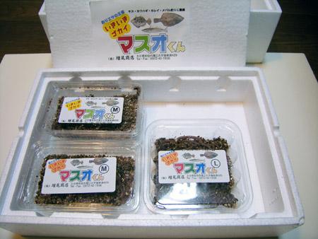 いきいきゴカイ マスオくん(3,600円セット)