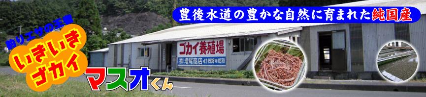 いきいきゴカイ マスオくん-商品一覧-株式会社 増尾商店