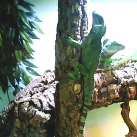 樹上棲のトカゲ用に縦にセッティングも可能です