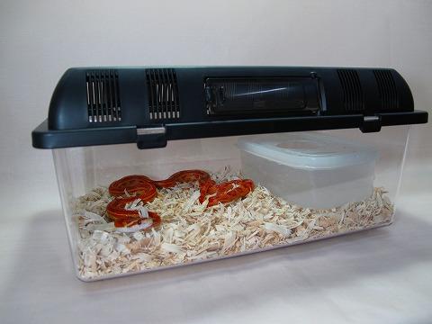 ナミヘビに最適