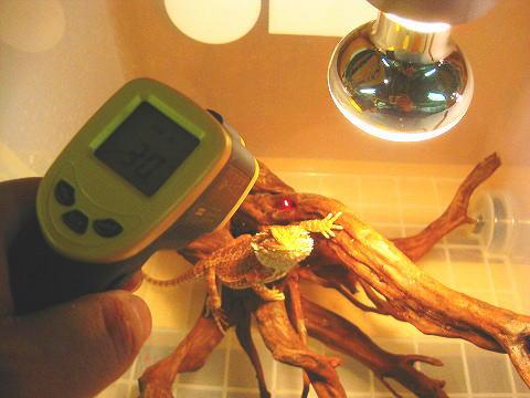 保温場所の温度も簡単に測定