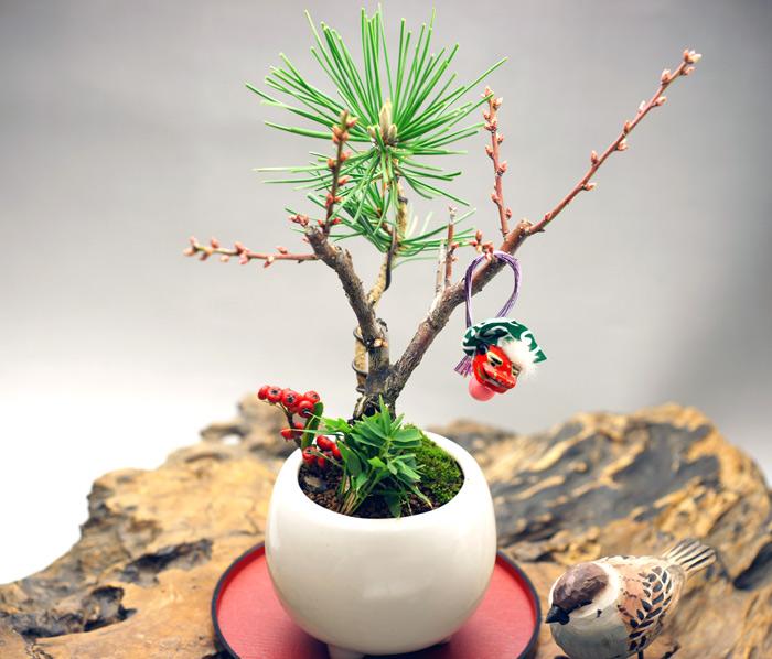 樹高19 cm 幅20 cm<br /><br />樹種・白梅・三河黒松・笹・千両<br /><br />*受け皿付き<br /><br />清純で甘く優しい香りの白梅、長寿の松、子孫繁栄の笹、真っ赤な実が鮮やかなピラカンサと、縁起の良いモダンな寄せ植えです。<br />