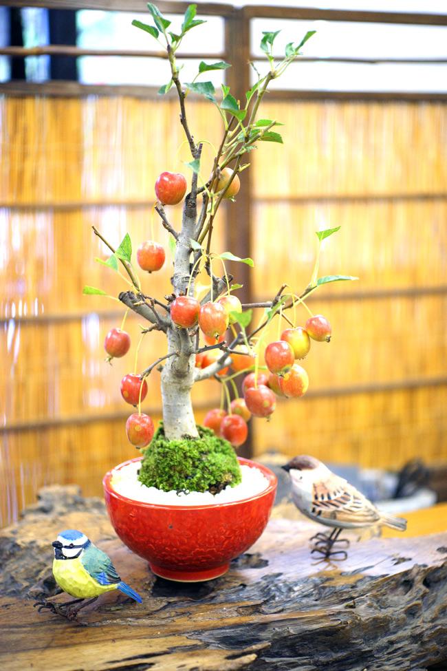 撮影日H24/10/27  樹高37cm  幅22cm   店長おすすめ!  姫林檎(ひめりんご)  4月頃、ピンク色の可愛い蕾をたくさん付け、満開時にはその花が白くなります。 花が咲いた後、緑色の実がだんだん大きくなり、9~11月頃には赤く色付いてきます。