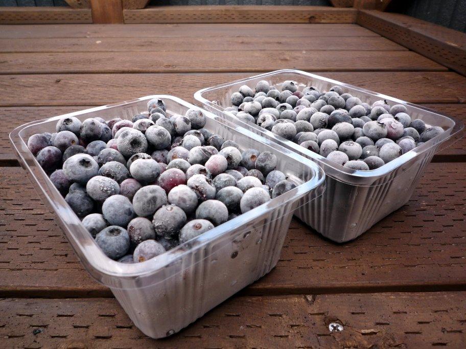 無農薬栽培の浅間高原産 冷凍ブルーベリー