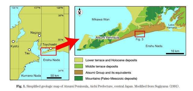 採掘地:渥美半島田原塁層