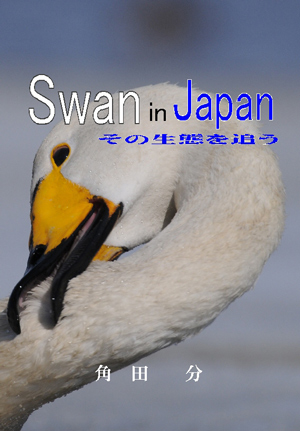 Swan in Japan~その生態を追う~