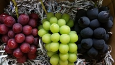 赤、青、黒など3色の葡萄の詰め合わせのとてもお得です。贈り物にもお薦めです