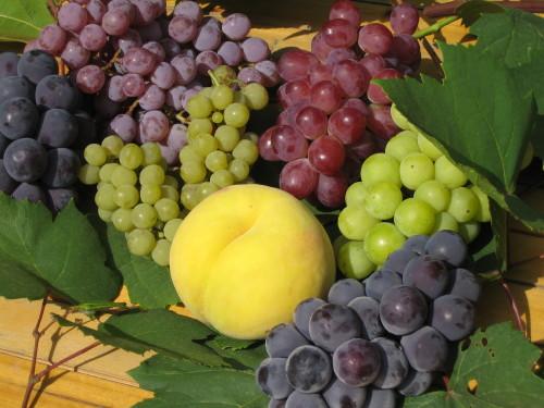黄金桃は白桃と同じく甘みが強く、程よい酸味もあり、お口の中でまったりととろける食感は絶妙です。お届け日はお任せくださいませ。