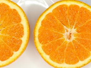 佐賀県太良町で栽培されている農家さんが少なく、希少品種の「はれひめ」。毎年リピーターも多く、贈答用にも喜ばれております。<br><br>味は温州みかんとオレンジの中間みたいなイメージで、どちらかと言うとみかんよりオレンジに近い味です。酸味が少なく糖度が高いのが特徴。また、女性にも人気の商品です。<br><br>※若干の傷は有りますが贈答用としても喜んで頂いております。<br>サイズ:Sサイズ~Lサイズのミックス(4.5kg)<br><br>生産、出荷:山本農園<br>