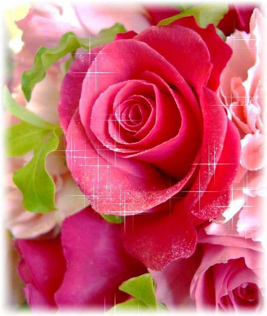 ツヤ感が華やかで美しいラメ入りのバラ