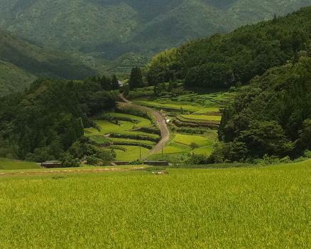 倉岳地区の棚田1
