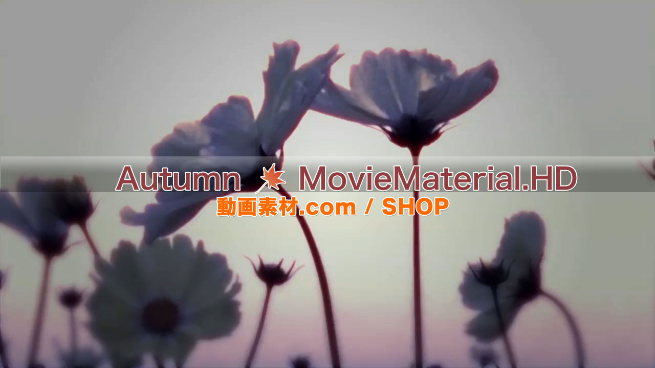 【Autumn MovieMaterial.HD】ハイビジョン 秋を題材にした実写映像素材とCG動画素材_image5