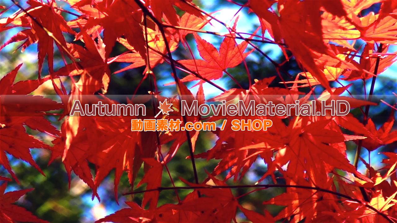 【Autumn MovieMaterial.HD】ハイビジョン 秋を題材にした実写映像素材とCG動画素材_image6