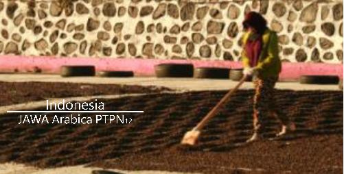 モカジャバの進化系 「ジャワ・アラビカ PTPN12」
