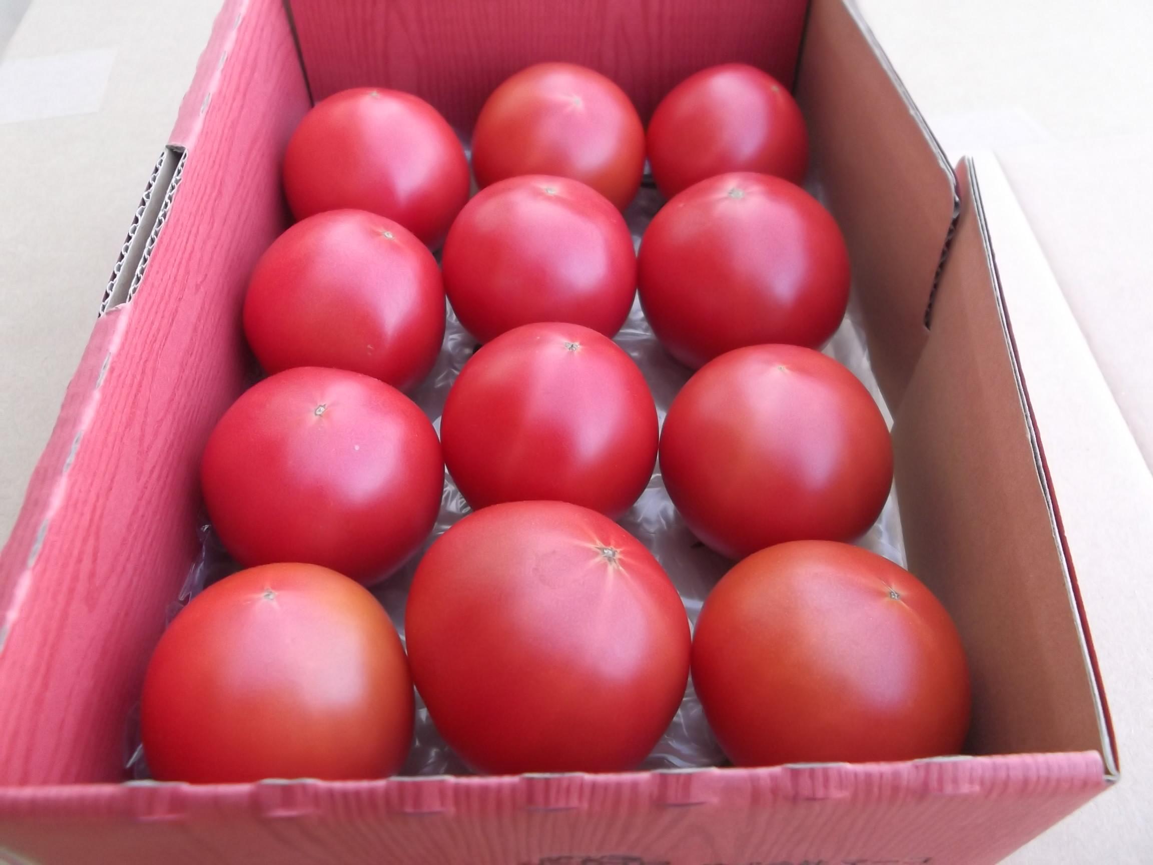 ぜいたくトマト(1kg)