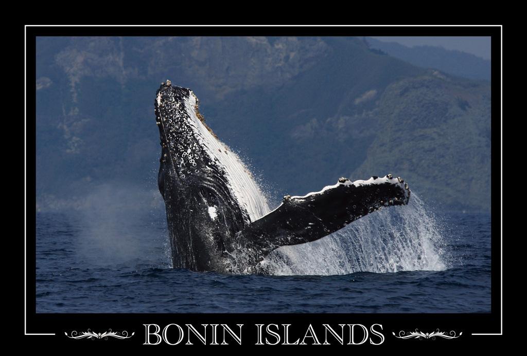 BONIN ISLANDS #006