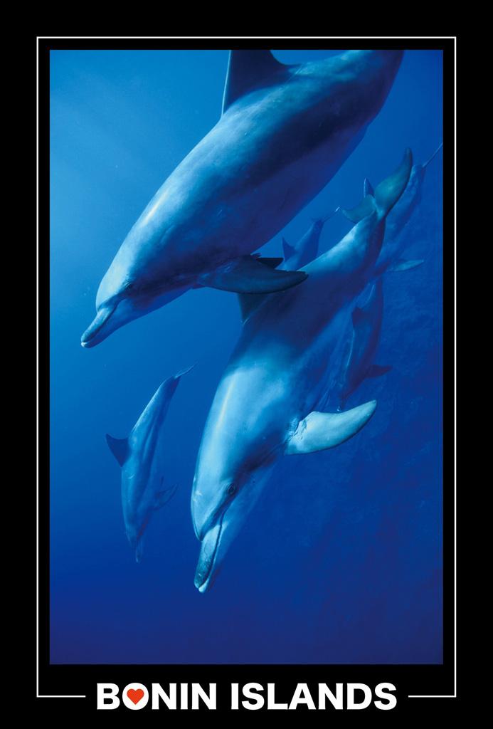 dolphin_004
