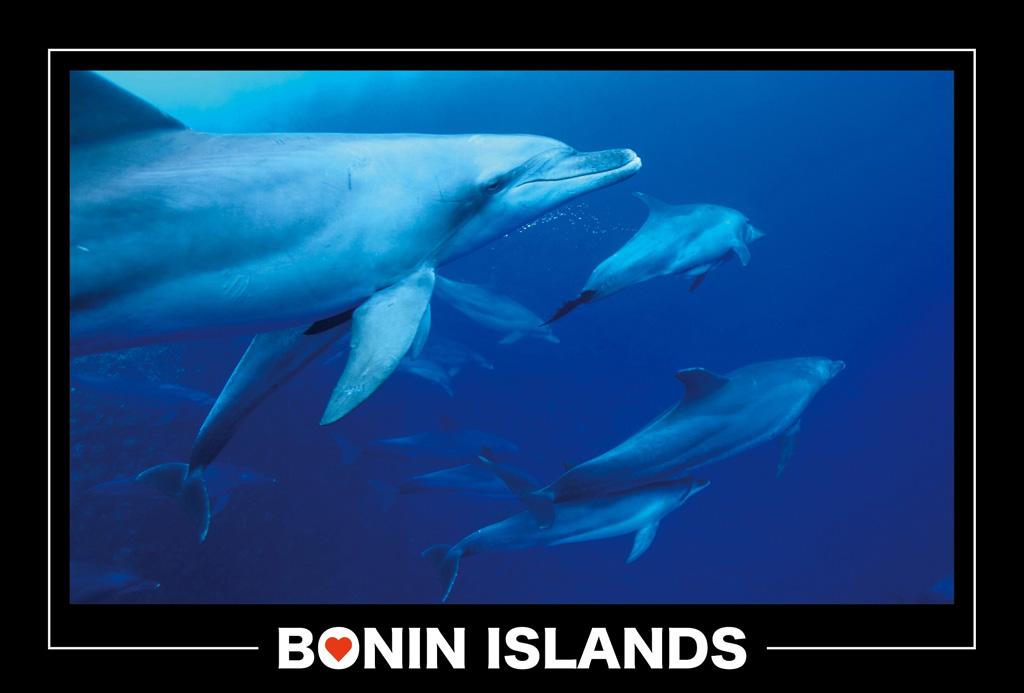 dolphin_003