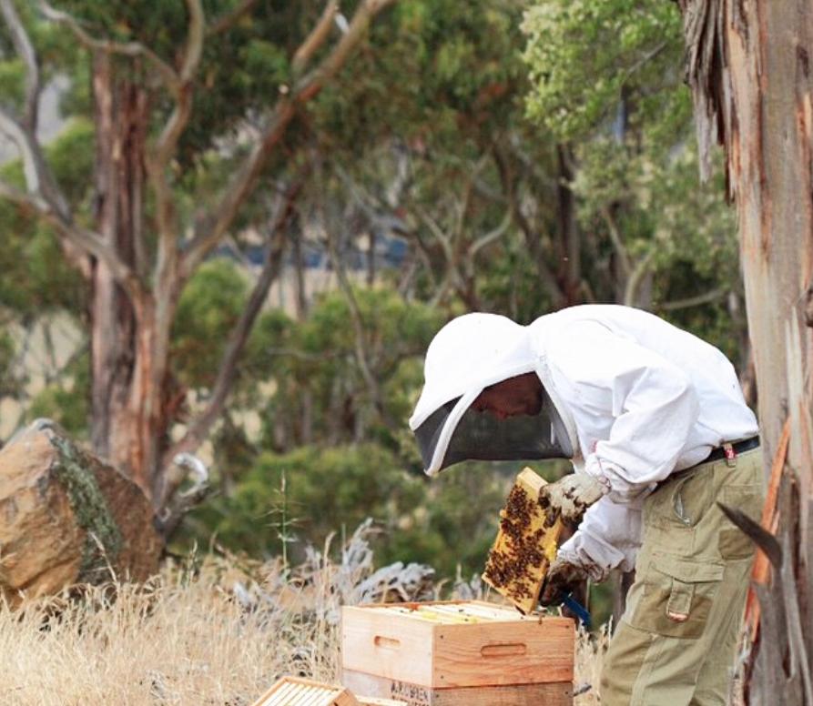 現地養蜂家の採集風景