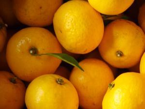 レモンのように黄色いくさら
