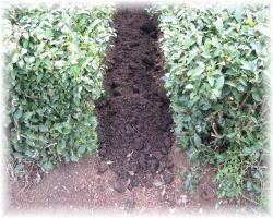 茶畑の畝間に散布します。