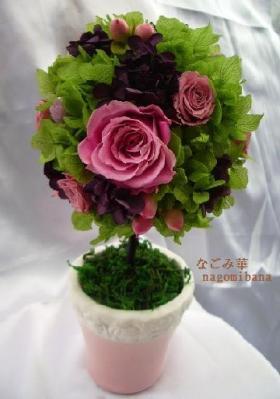 主のピンクに、また異なるピンクが斑入りのようなっています。