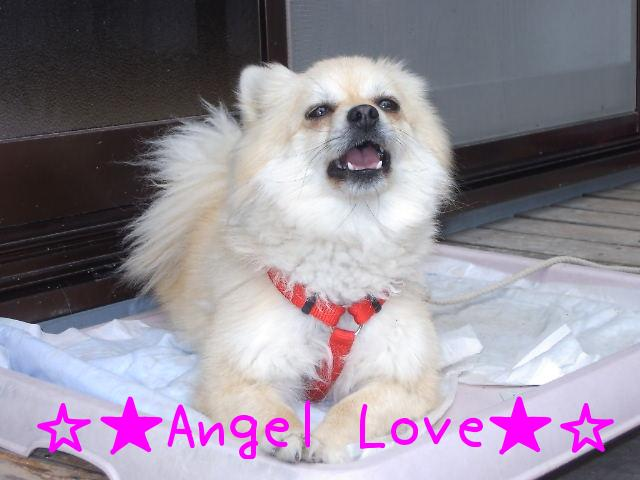 ☆★Angel Love★☆