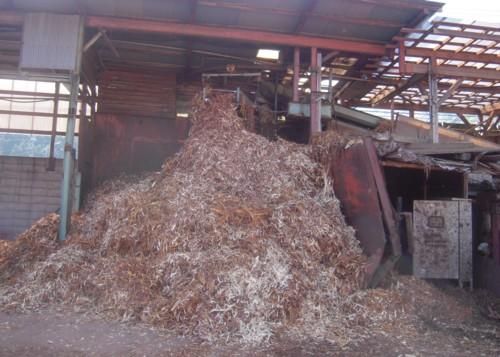 皮むき機でむかれた樹皮