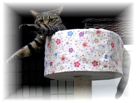 <p></p><p>☆・::::・☆・::::・☆・::::・☆・::::・☆</p><p><br></p><p>画像をクリックすると大きくなります。</p><p><br>キャットタワーによくついている、きのこのような<br>ちょっと深いタイプのベッドに<br>猫ちゃんたちは丸まって寝ています。<br>でも、このタイプのベッドは抜け毛がごっそり付着して<br>お手入れが大変ですよね。<br>そこで、そのタイプのベッドに被せて抜け毛の掃除を<br>楽にするためのカバーを作りました。<br>また、汚れてきたベッドを隠すのにもいいですよね♪<br><br>いちご柄と花柄の2種類を<br>ご用意いたしました。<br>お好みの柄をお選び下さい。<br>制作にあたっての基準とした<br>きのこベッド(写真に使用)のサイズは <br>直径約30cm x 高さ約17cm 入り口高さ10cmです。</p>
