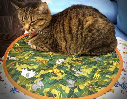 大(40cm)に約4.4kgの猫が乗っている様子です。