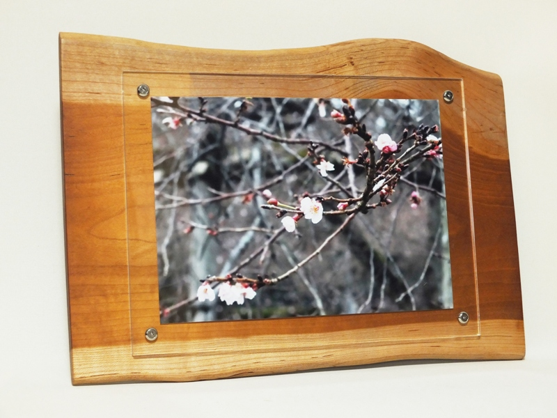 壁掛けタイプの天然木フォトフレーム<div>朱里桜の天然木で作った世界に一つしかない壁掛けフォトフレームです。<br>和室・洋室問わず、リビング・寝室から玄関など場所を選ばずに飾って頂けます。<br>A4サイズの写真が入れる事が出来る壁掛け天然木フォトフレームは<br>お部屋のインテリアやお店のディスプレーなどにピッタリな商品です。<br>落ち着きのある木の温もりを感じて頂ける壁掛けフォトフレームです<div>天然木サイズ幅約458ミリ高さ約315ミリ厚さ約15ミリ</div></div>
