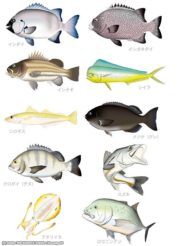 アングラーセット 魚イラスト10...