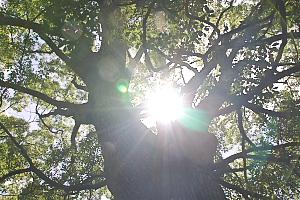楠から届けられた光