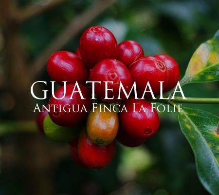 アンティグアからフレッシュな酸とキャラメルのような甘さのコーヒー