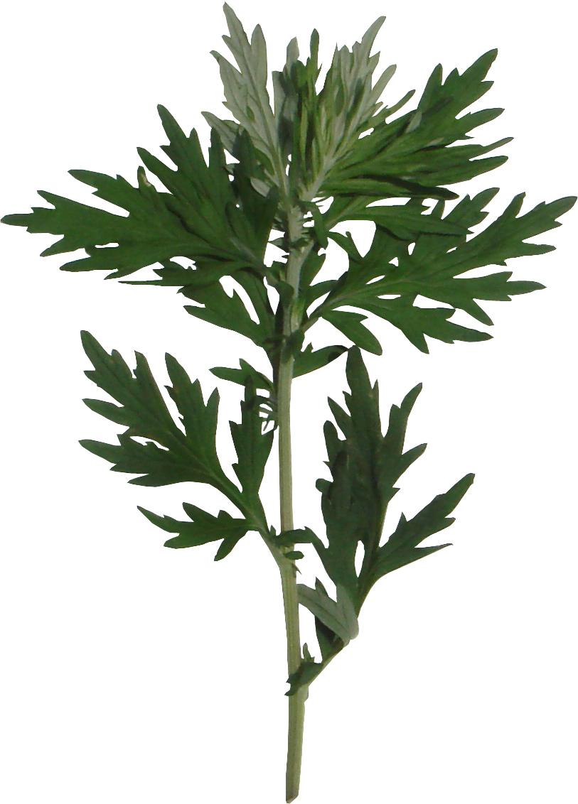 よもぎの生葉