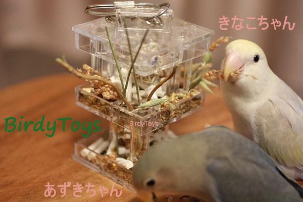 Foraging Box Feeder★フォージングボックス