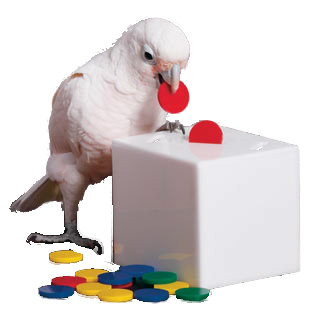 TEACH BOX★鳥さん用貯金箱セットS